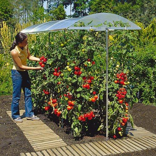 tomatengew chshaus tomatenzelt vs tomatendach kaufen. Black Bedroom Furniture Sets. Home Design Ideas